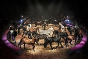 Le cirque Alexis Gruss et Les Farfadais vous présentent Quintessence! Ecuyers et acrobates pour un moment époustouflant et inoubliable.