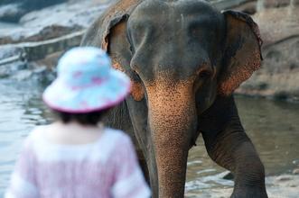 Casting hôte ou hôtesse pour gestion d'un point d'accueil dans un ZooParc