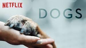 Casting candidats et leurs chiens pour tournage Série Netflix Dogs